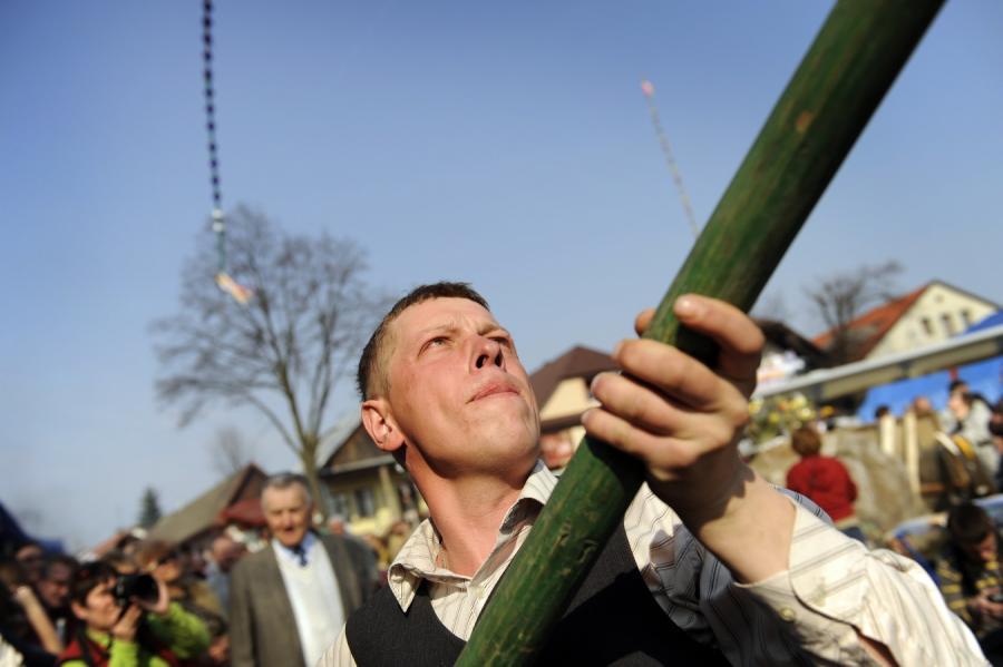 Padł nowy rekord w dorocznym konkursie na najwyższą palmę