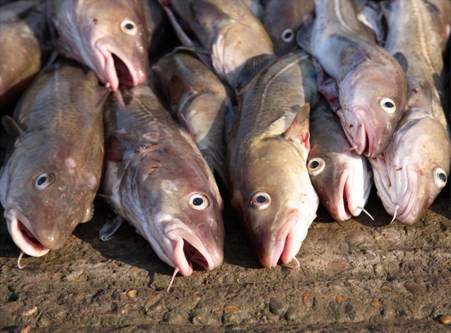Unia zabierze rybakom licencje