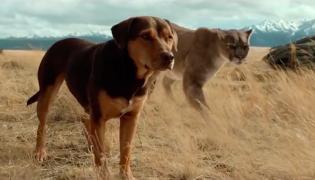 """Kadr z filmu """"O psie, który wrócił do domu"""""""
