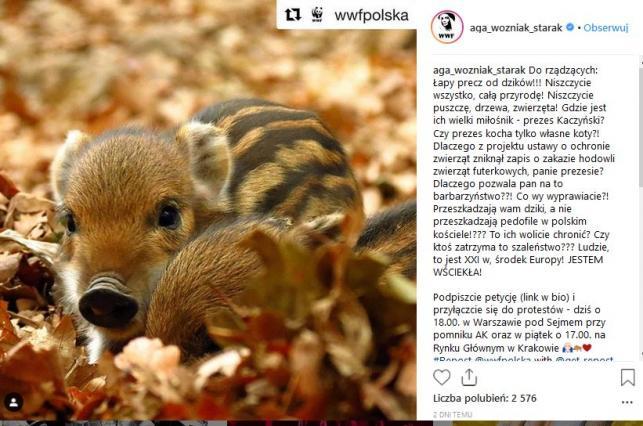 Agnieszka Woźniak-Starak w obronie dzików
