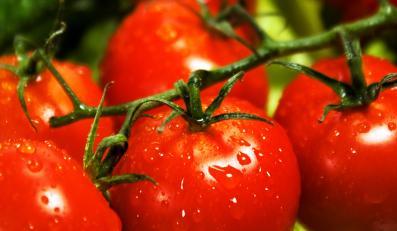 Które pomidory są najlepsze?