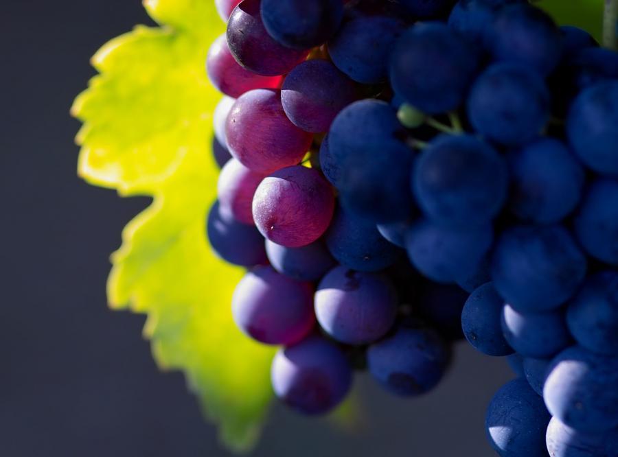Smaczne dojrzałe winogrona