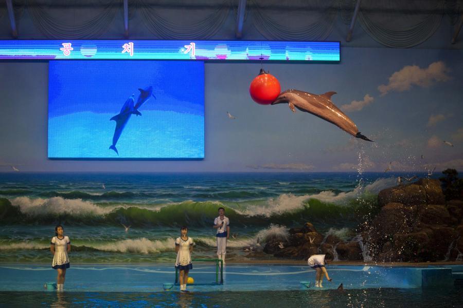 Pokaz w delfinarium