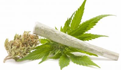 Marihuana uśmierza ból?