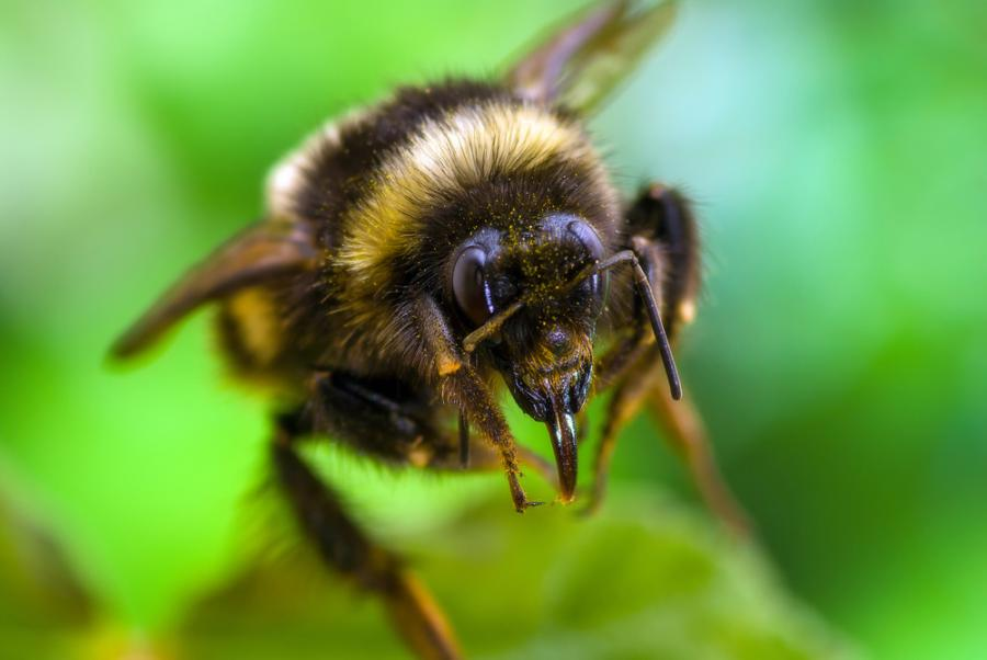 Pszczoła - zdjęcie ilustracyjne