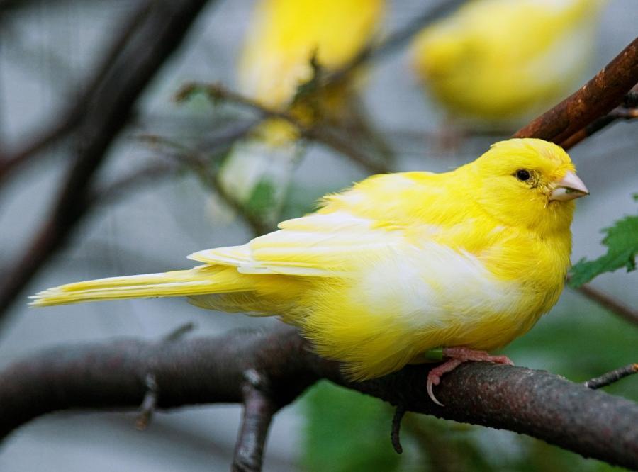 Karmnik przyciągnie ptaki do naszego ogrodu