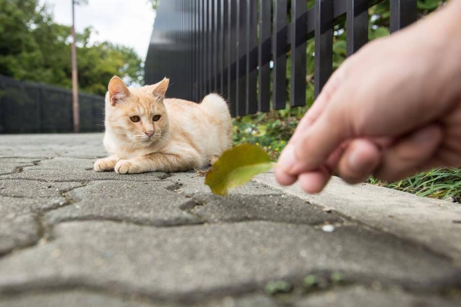Mały kot na ulicy w Japonii