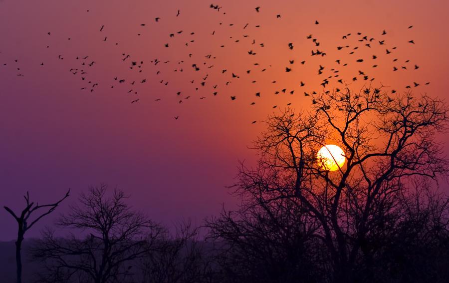 Park Narodowy Krugera w Afryce